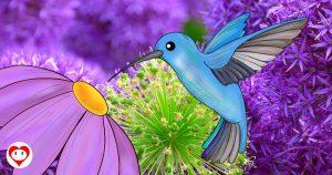 colibrì da colorare