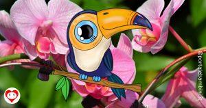 tucano da colorare